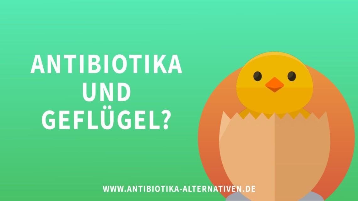 Antibiotika und Geflügel?